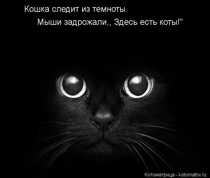 """Котоматрица: Кошка следит из темноты. Мыши задрожали,, Здесь есть коты!"""""""