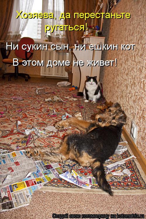 Котоматрица: Хозяева, да перестаньте ругаться! Ни сукин сын, ни ешкин кот В этом доме не живет!