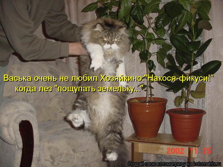 """Котоматрица: Васька очень не любил Хозяйкино:""""Накося-фикуси!"""" когда лез """"пощупать земельку..."""""""