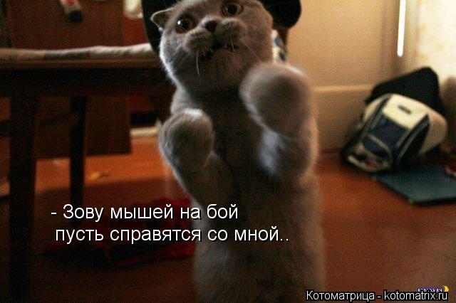 Котоматрица: - Зову мышей на бой пусть справятся со мной..