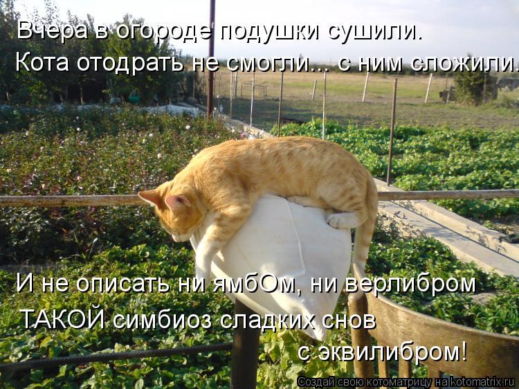 Котоматрица: Вчера в огороде подушки сушили. Кота отодрать не смогли... с ним сложили. И не описать ни ямбОм, ни верлибром ТАКОЙ симбиоз сладких снов с экв