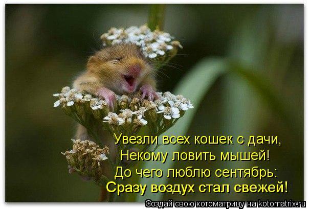 Котоматрица: Сразу воздух стал свежей! До чего люблю сентябрь: Некому ловить мышей! Увезли всех кошек с дачи,