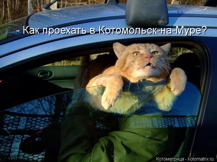 Котоматрица: - Как проехать в Котомольск-на-Муре?