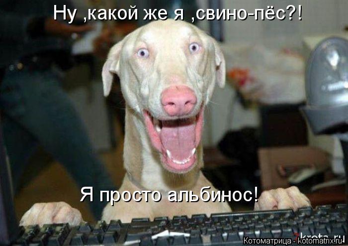 Котоматрица: Я просто альбинос! Ну ,какой же я ,свино-пёс?!