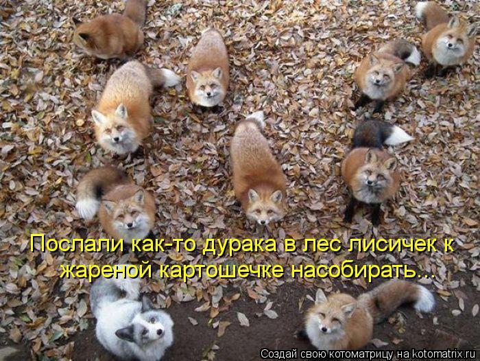 Котоматрица: Послали как-то дурака в лес лисичек к жареной картошечке насобирать...