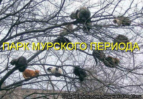 Котоматрица: ПАРК МУРСКОГО ПЕРИОДА