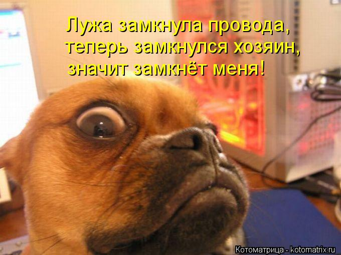 Котоматрица: Лужа замкнула провода, теперь замкнулся хозяин, значит замкнёт меня!