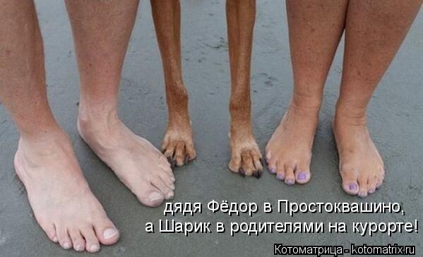 Котоматрица: дядя Фёдор в Простоквашино, а Шарик в родителями на курорте!