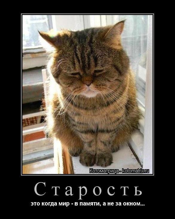 Котоматрица: Старость это когда мир - в памяти, а не за окном...