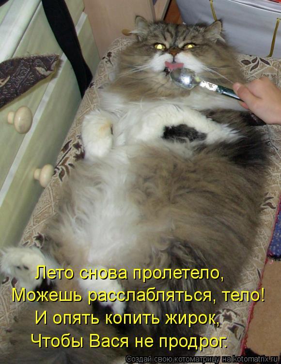 Котоматрица: Можешь расслабляться, тело! Лето снова пролетело, И опять копить жирок, Чтобы Вася не продрог.
