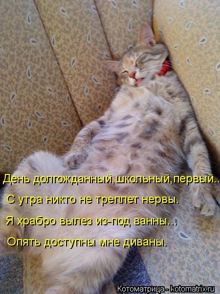 Котоматрица: День долгожданный,школьный,первый...  С утра никто не треплет нервы. Я храбро вылез из-под ванны... Опять доступны мне диваны.