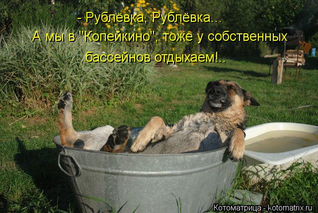 """Котоматрица: - Рублёвка, Рублёвка... А мы в """"Копейкино"""", тоже у собственных бассейнов отдыхаем!.."""