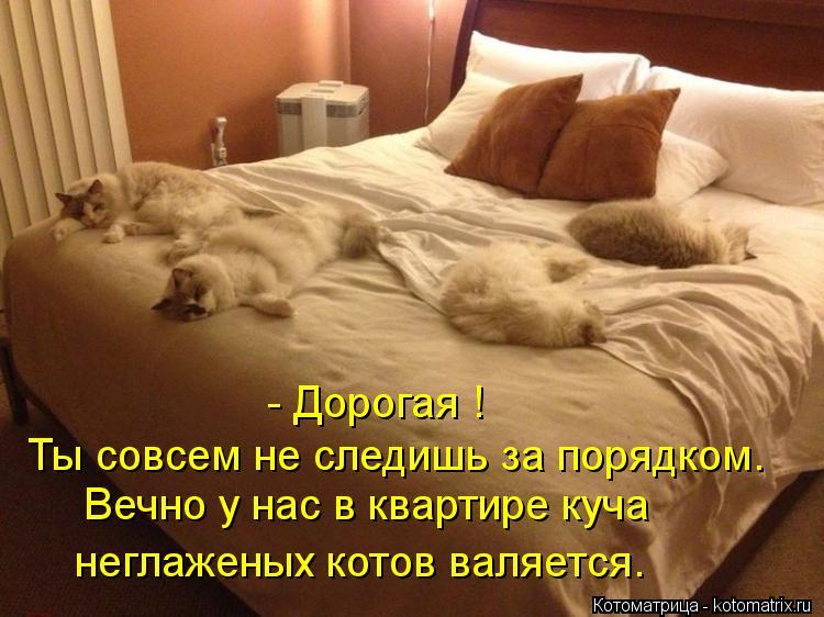 Котоматрица: - Дорогая !  Ты совсем не следишь за порядком. Вечно у нас в квартире куча  неглаженых котов валяется.