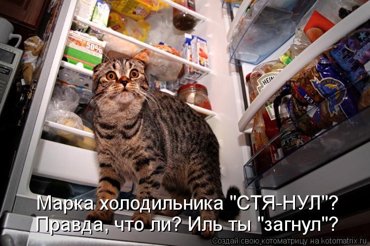 """Котоматрица: Правда, что ли? Иль ты """"загнул""""? Марка холодильника """"СТЯ-НУЛ""""?"""