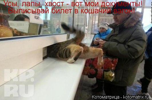 Котоматрица: Усы, лапы, хвост - вот мои документы! Выписывай билет в кошачий вагон!