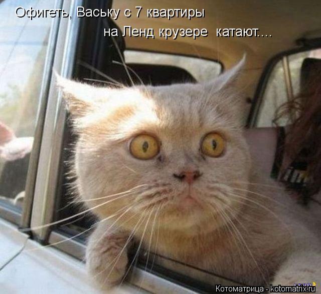 Котоматрица: Офигеть, Ваську с 7 квартиры на Ленд крузере  катают....