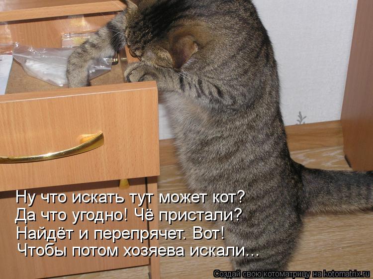 Котоматрица: Ну что искать тут может кот? Да что угодно! Чё пристали? Найдёт и перепрячет. Вот! Чтобы потом хозяева искали...