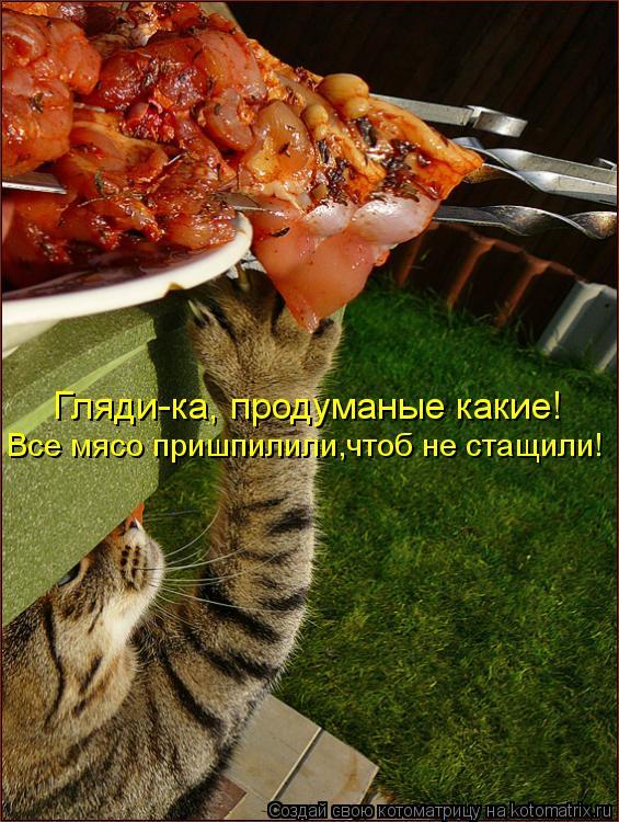 Котоматрица: Гляди-ка, продуманые какие! Все мясо пришпилили,чтоб не стащили!