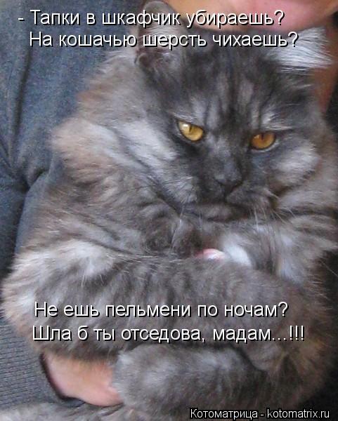 Котоматрица: - Тапки в шкафчик убираешь? На кошачью шерсть чихаешь? Не ешь пельмени по ночам? Шла б ты отседова, мадам...!!!
