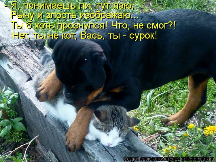 Котоматрица: - Я, понимаешь ли, тут лаю, Рычу и злость изображаю... Ты б хоть проснулся! Что, не смог?! Нет, ты не кот, Вась, ты - сурок!