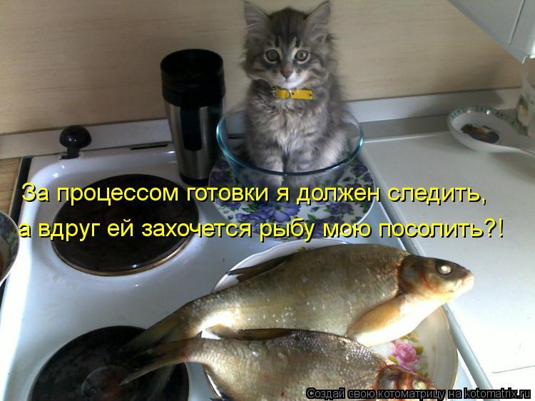 Котоматрица: За процессом готовки я должен следить, а вдруг ей захочется рыбу мою посолить?!