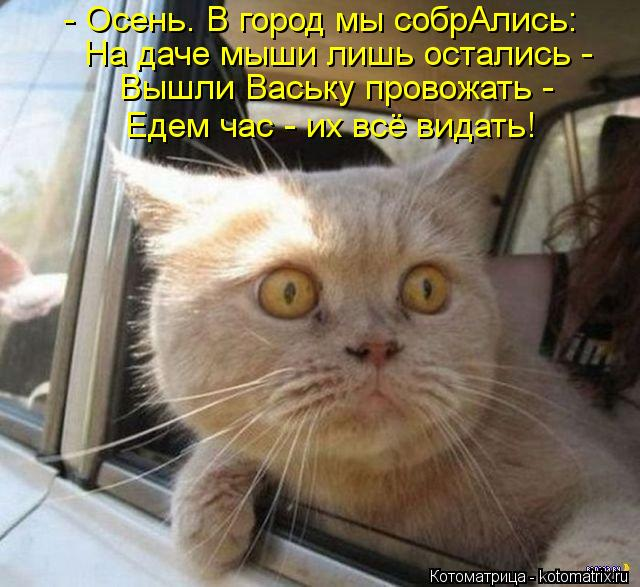Котоматрица: - Осень. В город мы собрАлись: На даче мыши лишь остались -  Вышли Ваську провожать -  Едем час - их всё видать!