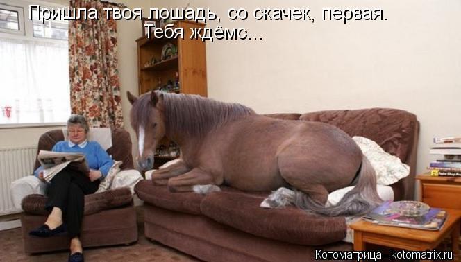 Котоматрица: Пришла твоя лошадь, со скачек, первая. Тебя ждёмс...