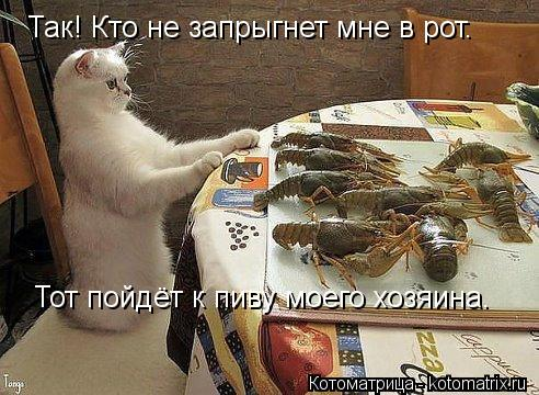 Котоматрица: Так! Кто не запрыгнет мне в рот. Тот пойдёт к пиву моего хозяина.