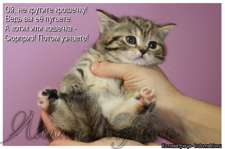 Котоматрица: Ой, не крутите крошечку! Ведь вы её пугаете. А котик или кошечка -  Сюрприз! Потом узнаете!