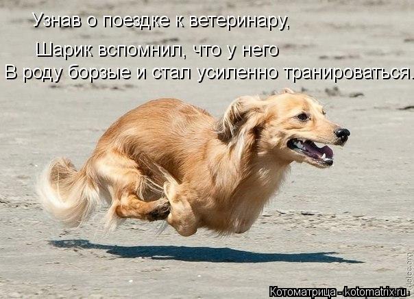 Котоматрица: Узнав о поездке к ветеринару, Шарик вспомнил, что у него В роду борзые и стал усиленно транироваться.