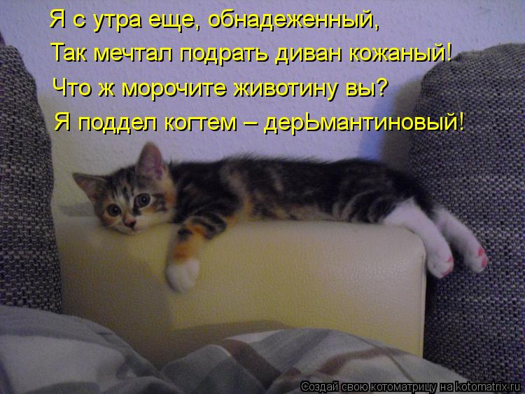 Котоматрица: Я с утра еще, обнадеженный, Так мечтал подрать диван кожаный! Что ж морочите животину вы? Я поддел когтем – дерЬмантиновый!