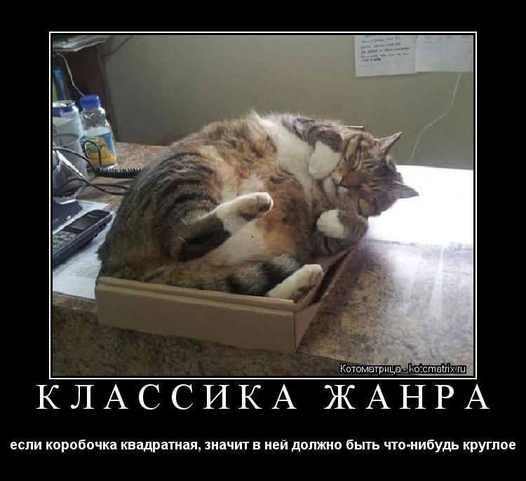 Котоматрица: КЛАССИКА ЖАНРА если коробочка квадратная, значит в ней должно быть что-нибудь круглое