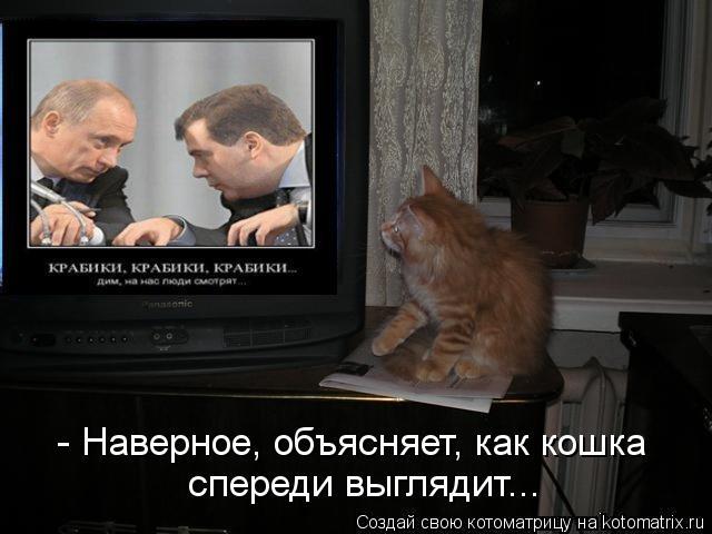 Котоматрица: - Наверное, объясняет, как кошка  спереди выглядит...