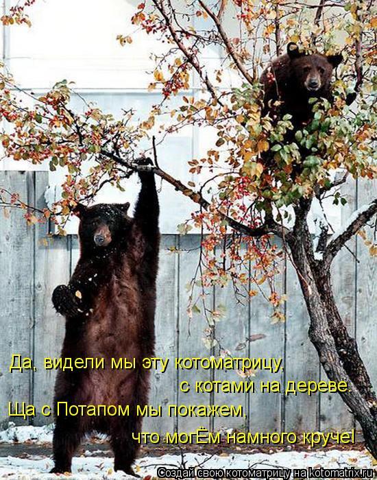 Да, видели мы эту котоматрицу,  с котами на дереве. Ща с Потапом мы покажем, что могЁм намного круче!