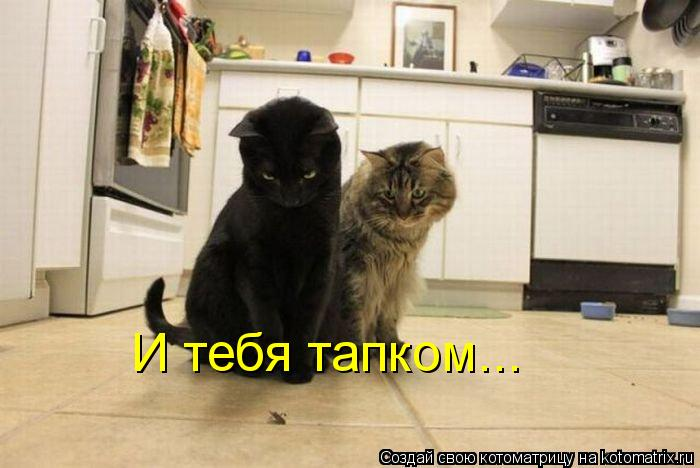 Котоматрица: И тебя тапком...