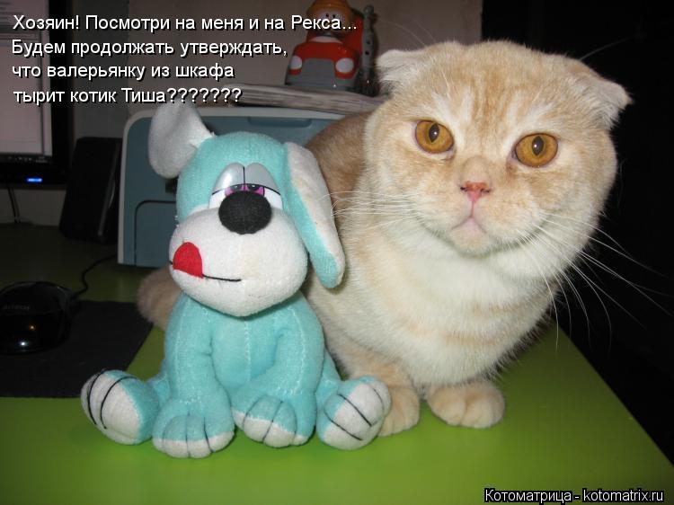 Котоматрица: Хозяин! Посмотри на меня и на Рекса... Будем продолжать утверждать, что валерьянку из шкафа тырит котик Тиша???????