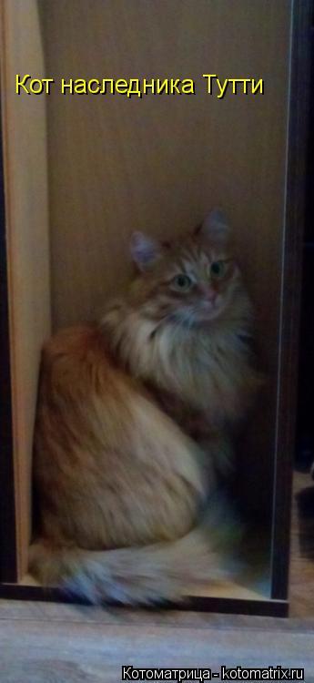 Котоматрица: Кот наследника Тутти