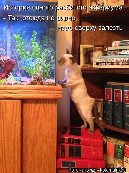 Котоматрица: История одного разбитого аквариума - Так ,отсюда не видно, надо сверху залезть