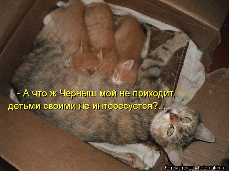 Котоматрица: - А что ж Черныш мой не приходит, детьми своими не интересуется?...