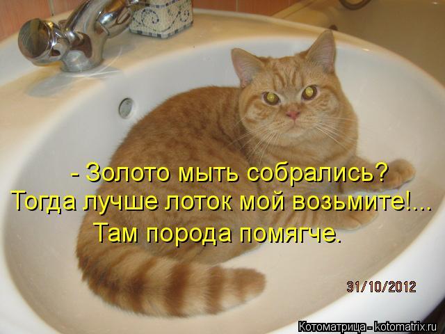 Котоматрица: - Золото мыть собрались? Тогда лучше лоток мой возьмите!... Там порода помягче.