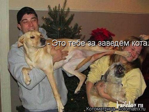 Котоматрица: - Это тебе за заведём кота...