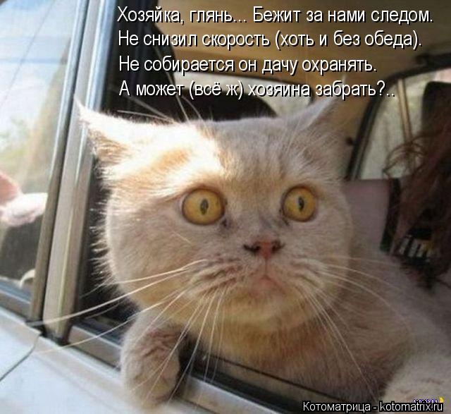 Котоматрица: Хозяйка, глянь... Бежит за нами следом. Не снизил скорость (хоть и без обеда). Не собирается он дачу охранять. А может (всё ж) хозяина забрать?..