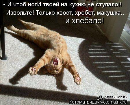 Котоматрица: - И чтоб ногИ твоей на кухню не ступало!! - Извольте! Только хвост, хребет, макушка... и хлебало!