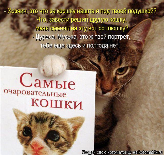 Котоматрица: - Хозяин, это что за крошку нашла я под твоей подушкой? Что, завести решил другую кошку,  меня сменял на эту вот соплюшку? тебе еще здесь и полг