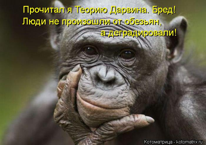 Котоматрица: Прочитал я Теорию Дарвина. Бред! Люди не произошли от обезьян,  а деградировали!