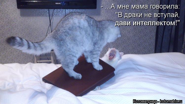 """Котоматрица: - ...А мне мама говорила:  """"В драки не вступай, дави интеллектом!"""""""
