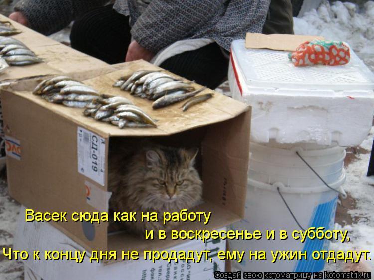 Котоматрица: Васек сюда как на работу и в воскресенье и в субботу, Что к концу дня не продадут, ему на ужин отдадут.