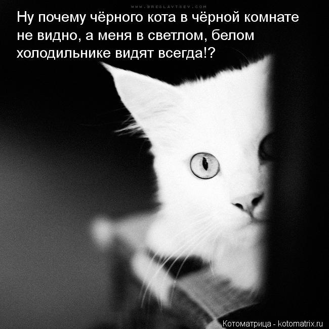 Котоматрица: Ну почему чёрного кота в чёрной комнате не видно, а меня в светлом, белом  холодильнике видят всегда!?