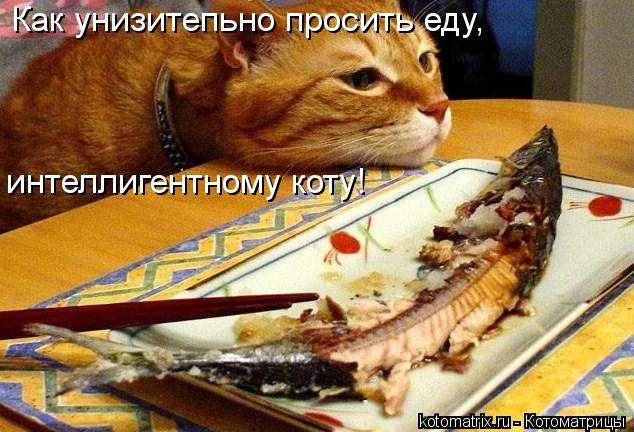 Котоматрица: Как унизитепьно просить еду, интеллигентному коту!