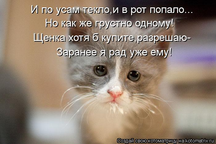 Котоматрица: И по усам текло,и в рот попало... Но как же грустно одному! Щенка хотя б купите,разрешаю- Заранее я рад уже ему!